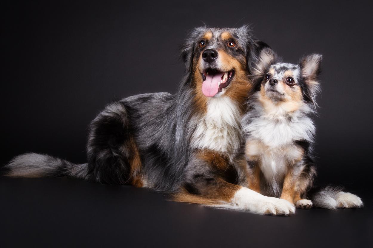1000+ Bilder zu Hund  auf Pinterest  Bauchtasche